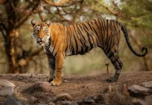 Panna Tiger Reserve gets status of Biosphere Reserve from UNESCO
