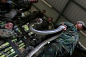Know About Cobra Gold Drill Where Soldiers Eat Snakes !