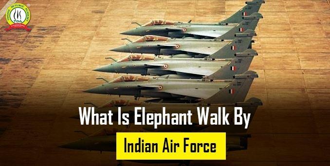 What Is Elephant Walk